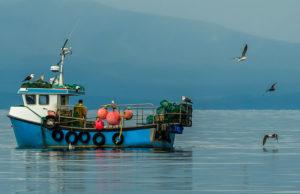Scottish fish exports make a splash